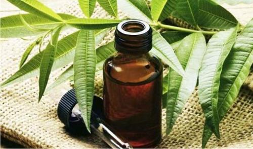 чайное дерево, масло
