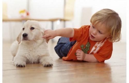 собака, преданность