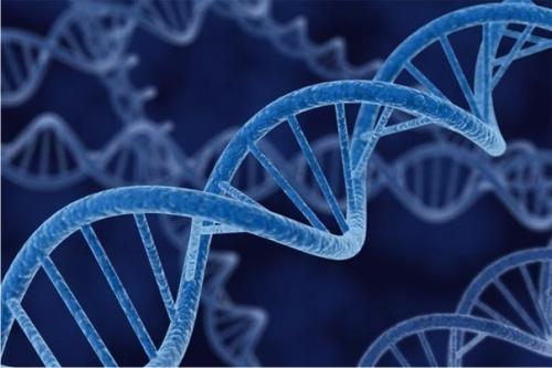 долгожительство, ДНК