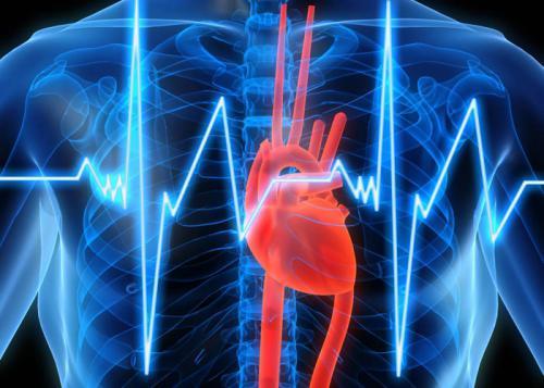 сердце, кардиолог