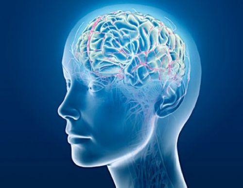 мысли, мозг